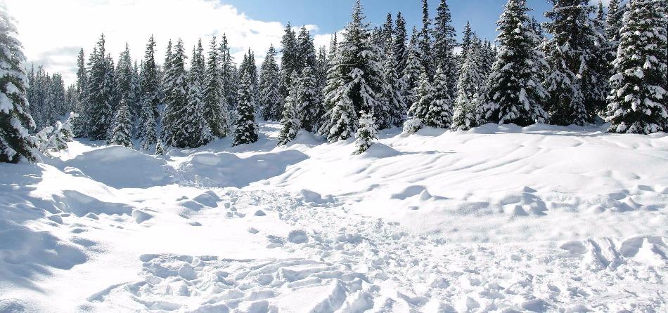 Il silenzioso rumore della neve