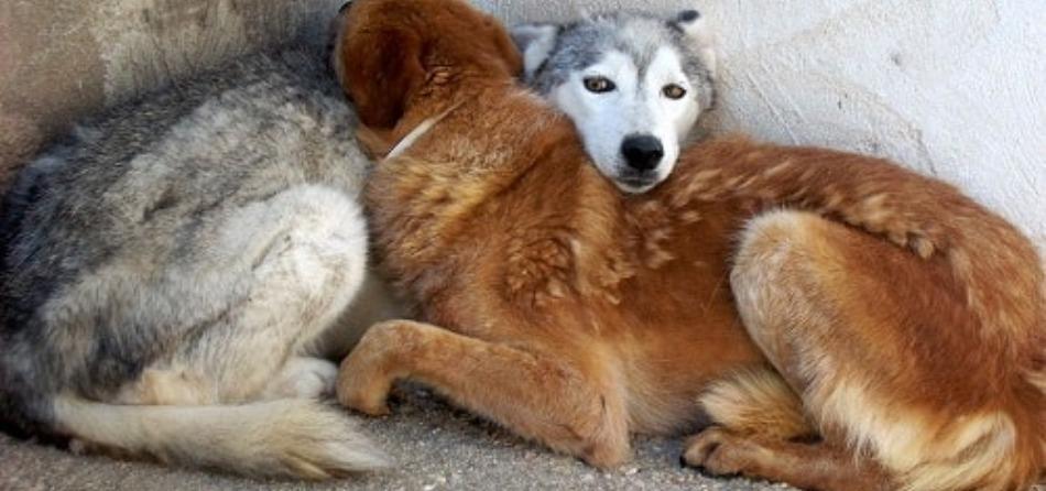 cani freddo