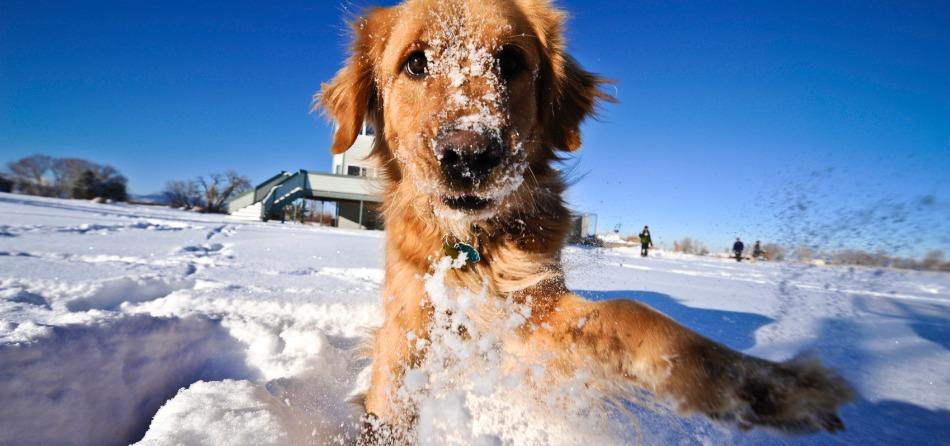 cane neve