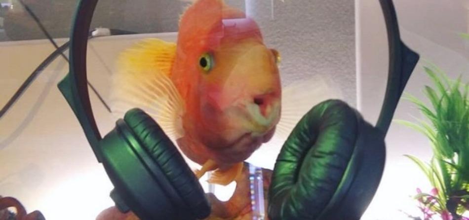 Il salvatore della diretta: Nemo